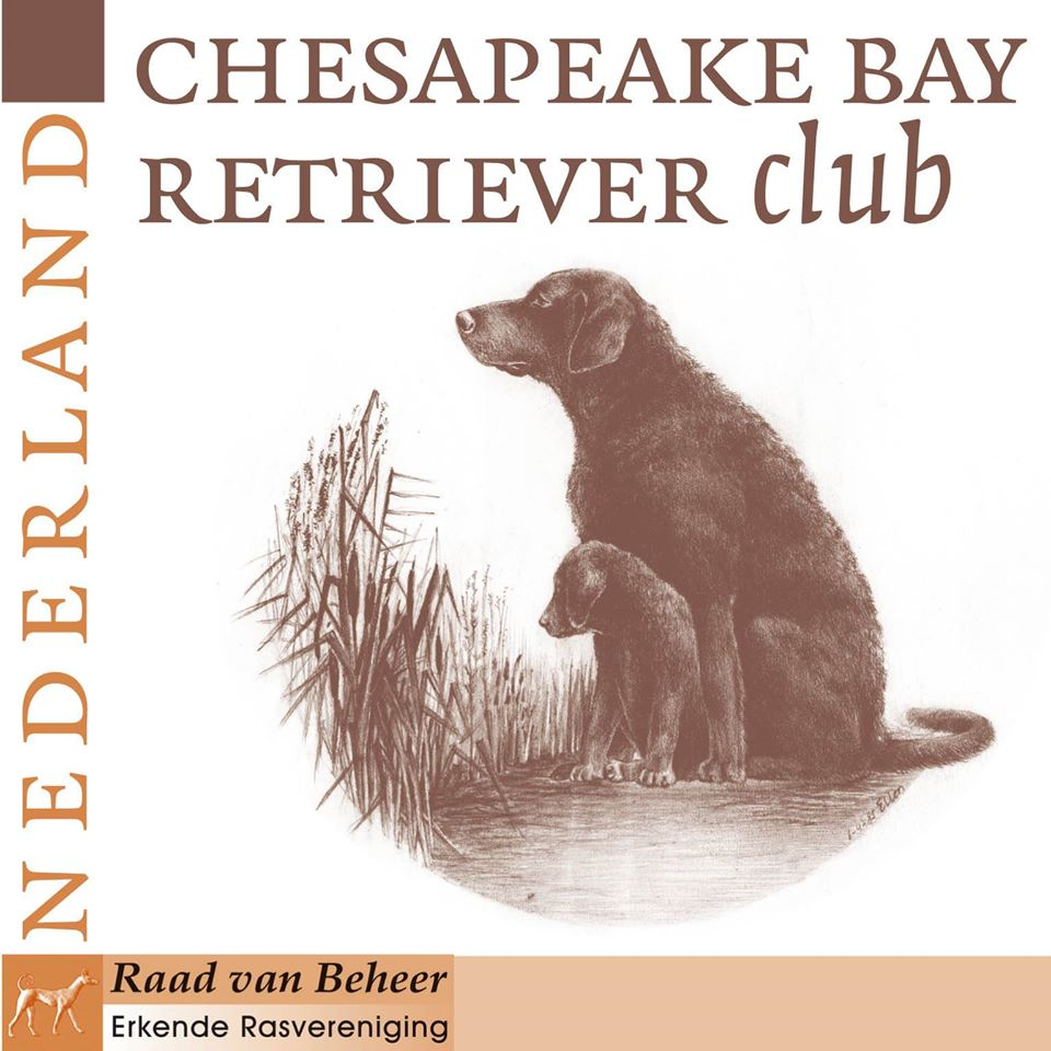 Chesapeake Bay Retriever Club Nederland
