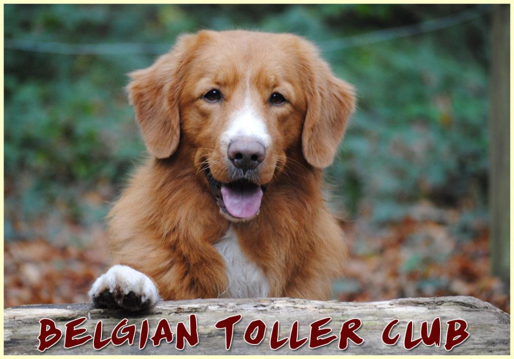 Belgian Toller Club
